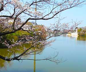 サニーヴィラ桧原桜公園<br/>【福岡市南区】<分譲住宅>